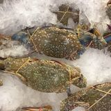 Horse crab and pickle crab shellfish Royalty Free Stock Photos