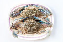 Horse crab on white Stock Image