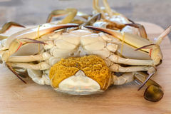 Horse crab. On wooden floor royalty free stock photos