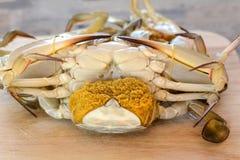 Horse crab Royalty Free Stock Photos