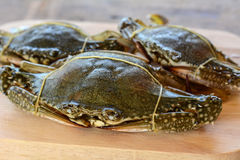 Horse crab. On wooden floor royalty free stock photo