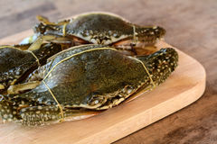 Horse crab. On wooden floor stock images
