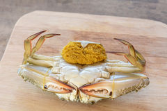 Horse crab. On wooden floor royalty free stock photography