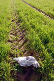 Horse cranium in the spring crop field Stock Photography