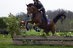 Horse cross country teenage competition jumping tree trunks and jumps over barrels of water and colored bars. The competitions are in europe girl wearing black Stock Photography