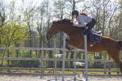 Horse cross country teenage competition jumping tree trunks and jumps over barrels of water and colored bars Royalty Free Stock Images