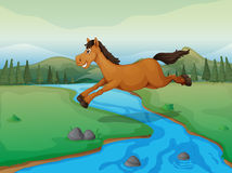 Horse crossing the river Stock Image