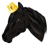Horse with crown. Black head of horse with gold crown Stock Image