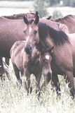 Horse cub hiding royalty free stock photos