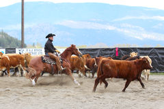 Horse Cutting Show Stock Photo
