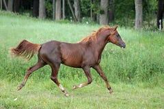 Horse Dancer Stock Photos