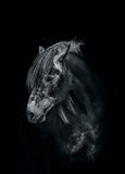 Horse in the dark Stock Images