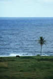 Horse and date palm on the island of Maui, Hawaii Stock Photo