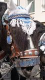 Horse in decorative Oktoberfest bridle, Munich, Germany stock photos