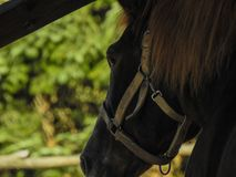 Horse Deep Closeup From An Angle stock image
