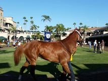 Horse Del Mar Fair Σαν Ντιέγκο Στοκ εικόνες με δικαίωμα ελεύθερης χρήσης