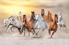 Free Horse Desert Run Stock Images - 75792604