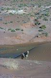 Horse in desert Stock Photos