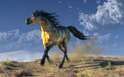 A Horse in the Desert. A wild horse with a Kiger coat paces through a dry rocky desert with small patches of dry brown grass. His hooves kick up a cloud of dust royalty free illustration
