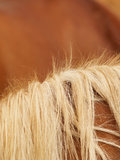 Horse detail. Horse detail, fur and mane, side view, horse background Stock Image