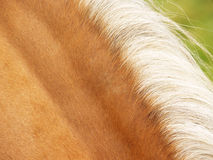 Horse detail (61. Horse detail, mane and fur, side  view Royalty Free Stock Image