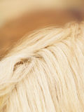 Horse detail (64), fur and mane. Side view Royalty Free Stock Photos