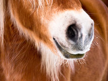Horse detail (85) nose and nostrils. Horse detail, nose, nostrils and mouth front view, side view, outside Stock Image