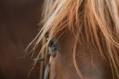 Horse detail closeup Stock Photos