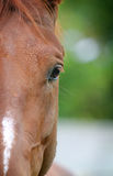 Horse detail closeup Royalty Free Stock Photography