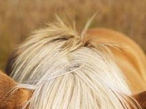 Horse detail (34) Royalty Free Stock Photo