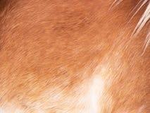 Horse detail (179) Royalty Free Stock Image