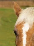 Horse detail (47) Stock Photos
