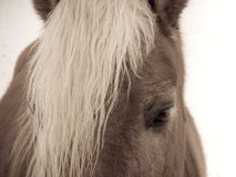 Horse detail (101) head Stock Image