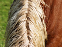 Horse detail 35, mane Stock Photos