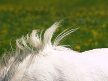 Horse detail  Royalty Free Stock Images
