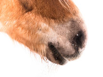 Horse detail (148), nose close-up Stock Images