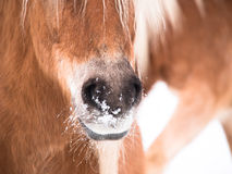 Horse detail (141) Royalty Free Stock Photos