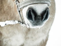 Horse detail (77) Royalty Free Stock Photography