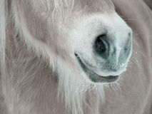 Horse detail (87) Royalty Free Stock Photos