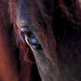 Horse. A detailed and beautiful closeup of a horse eye - focus on pupil Stock Photo