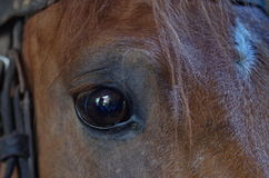 Horse. Detailed closeup of a horse eye Royalty Free Stock Image