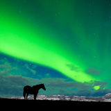 Horse distant snowy peaks with Northern Lights sky. Silhouette of horse on pasture in moon-lit night with distant snowy mountain range and spectacular display of Royalty Free Stock Photos
