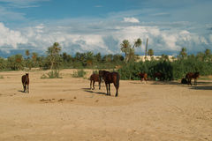 Horse with Djerba. Djerba largest island of North Africa's east coast near the border with Tunisia and Libya, with thousands of palm trees, almost completely Stock Photo