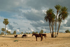 Horse with Djerba Stock Image