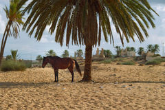 Horse with Djerba Stock Photo