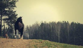 Horse with dog. A horse with a small dog standing on a hill,  in a forest Royalty Free Stock Photography