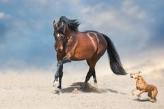 Horse and dog in desert
