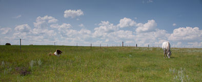 Horse and dog in a field with clouds Royalty Free Stock Photos