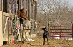 Horse and Dog Having Ranch Conversation Stock Photos