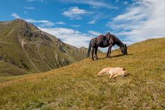 Horse and dog on the hill. In the mountain of Kyrgyzstan Royalty Free Stock Photo